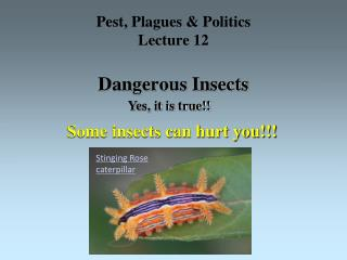 Pest, Plagues & Politics Lecture 12 Dangerous Insects
