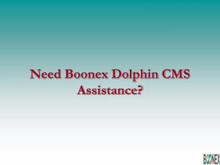 Boonex Dolphin development
