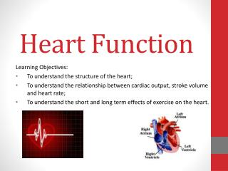 Heart Function