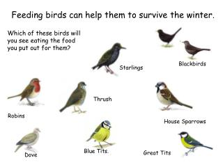 Feeding birds can help them to survive the winter.