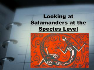 Looking at Salamanders at the Species Level