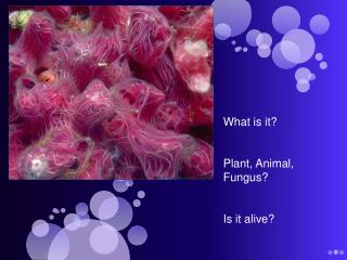 What is it? Plant, Animal, Fungus? Is it alive?