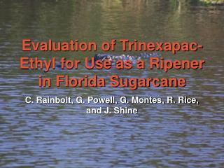Evaluation of Trinexapac-Ethyl for Use as a Ripener in Florida Sugarcane