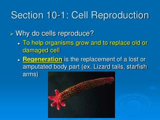 Section 10-1: Cell Reproduction