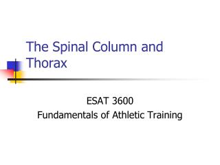 The Spinal Column and Thorax