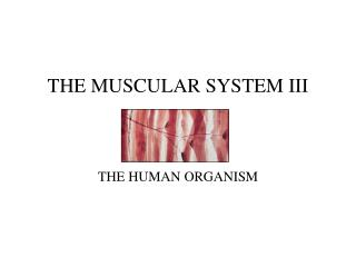 THE MUSCULAR SYSTEM III