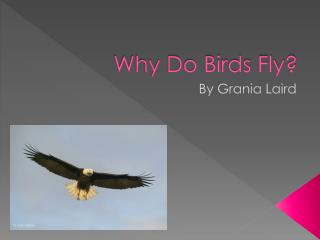 Why Do Birds Fly?