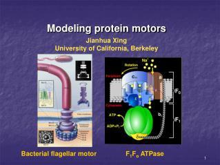 Modeling protein motors