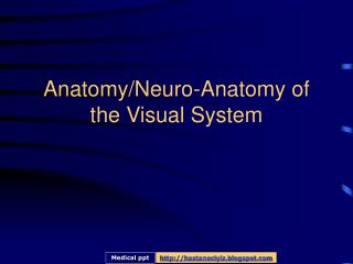 Anatomy/Neuro-Anatomy of the Visual System