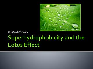 Superhydrophobicity  and the Lotus Effect