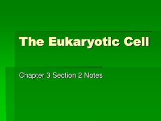 The Eukaryotic Cell