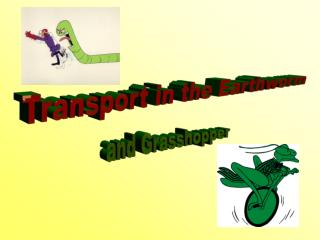 Transport in the Earthworm