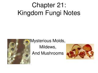 Chapter 21:  Kingdom Fungi Notes