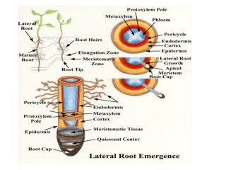 Plant structure 	- cells,  tissue, organisation  & growth Leaves and photosynthesis