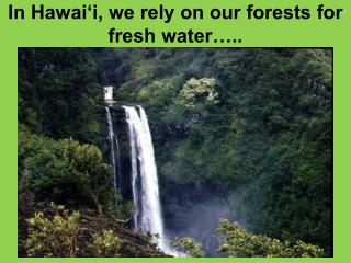 In Hawai i, we rely on our forests for fresh water ..