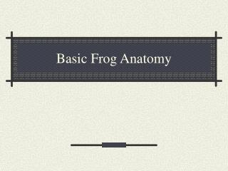 Basic Frog Anatomy