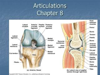 Articulations Chapter 8