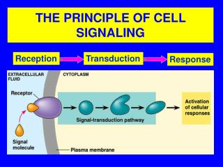THE PRINCIPLE OF CELL SIGNALING
