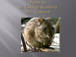 Potoroo By George Hanford Mrs. Cottrell