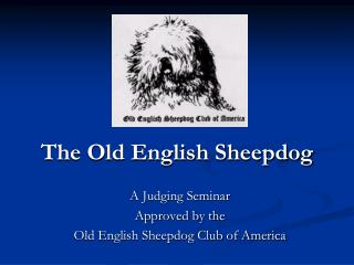 The Old English Sheepdog