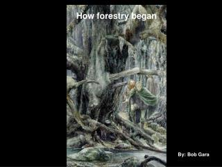 How Forestry Began