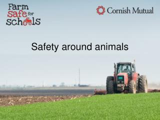 Safety around animals