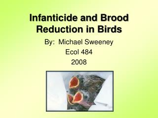 Infanticide and Brood Reduction in Birds