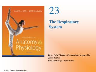 23 The Respiratory System