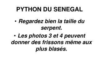 PYTHON DU SENEGAL