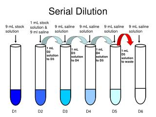 Serial Dilution