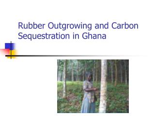 Rubber Outgrowing and Carbon Sequestration in Ghana