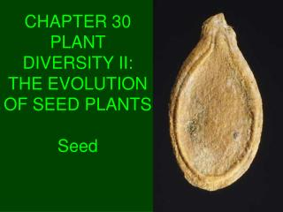 CHAPTER 30  PLANT DIVERSITY II:  THE EVOLUTION OF SEED PLANTS Seed