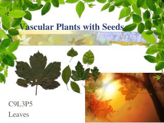 Vascular Plants with Seeds