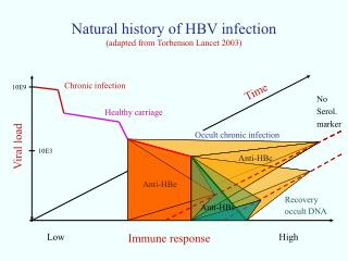 Natural history of HBV infection (adapted from Torbenson Lancet 2003)
