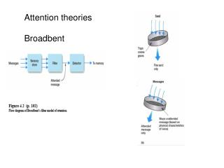 Attention theories Broadbent