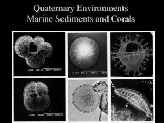 Quaternary Environments Marine Sediments and Corals