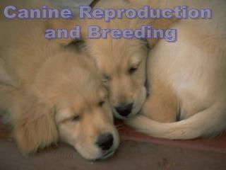 Canine Reproduction  and Breeding