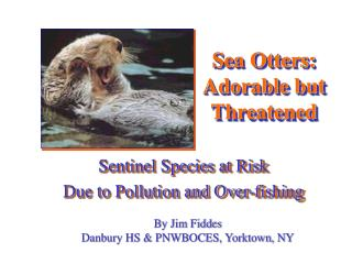 Sea Otters: Adorable but Threatened