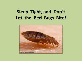 Sleep  Tight, and  Don't   Let  the  Bed  Bugs  Bite!