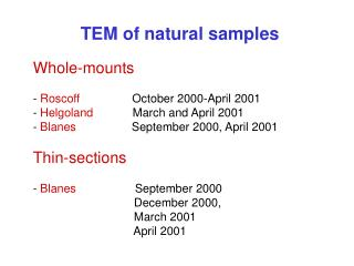 TEM of natural samples Whole-mounts -  Roscoff                 October 2000-April 2001