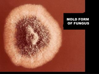 MOLD FORM  OF FUNGUS