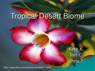 Tropical Desert Biome