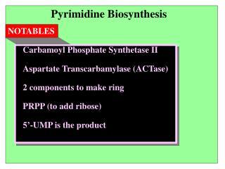 Pyrimidine Biosynthesis