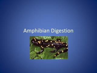 Amphibian Digestion