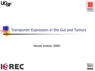 Transporter Expression in the Gut and Tumors