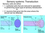 Sensory systems: Transduction