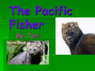 The Pacific Fisher
