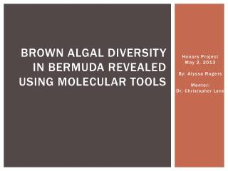 Brown Algal Diversity in Bermuda Revealed using  Molecular Tools