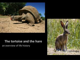 The tortoise and the hare an overview of life history