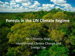 Forests  in  the  UN  Climate  Regime